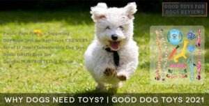 Why Dogs Need Toys? | Good Dog Toys 2021